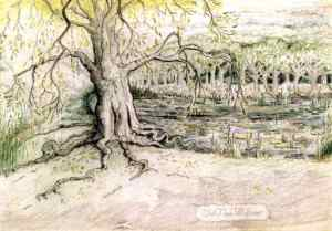 J.R.R._Tolkien_-_Old_Man_Willow